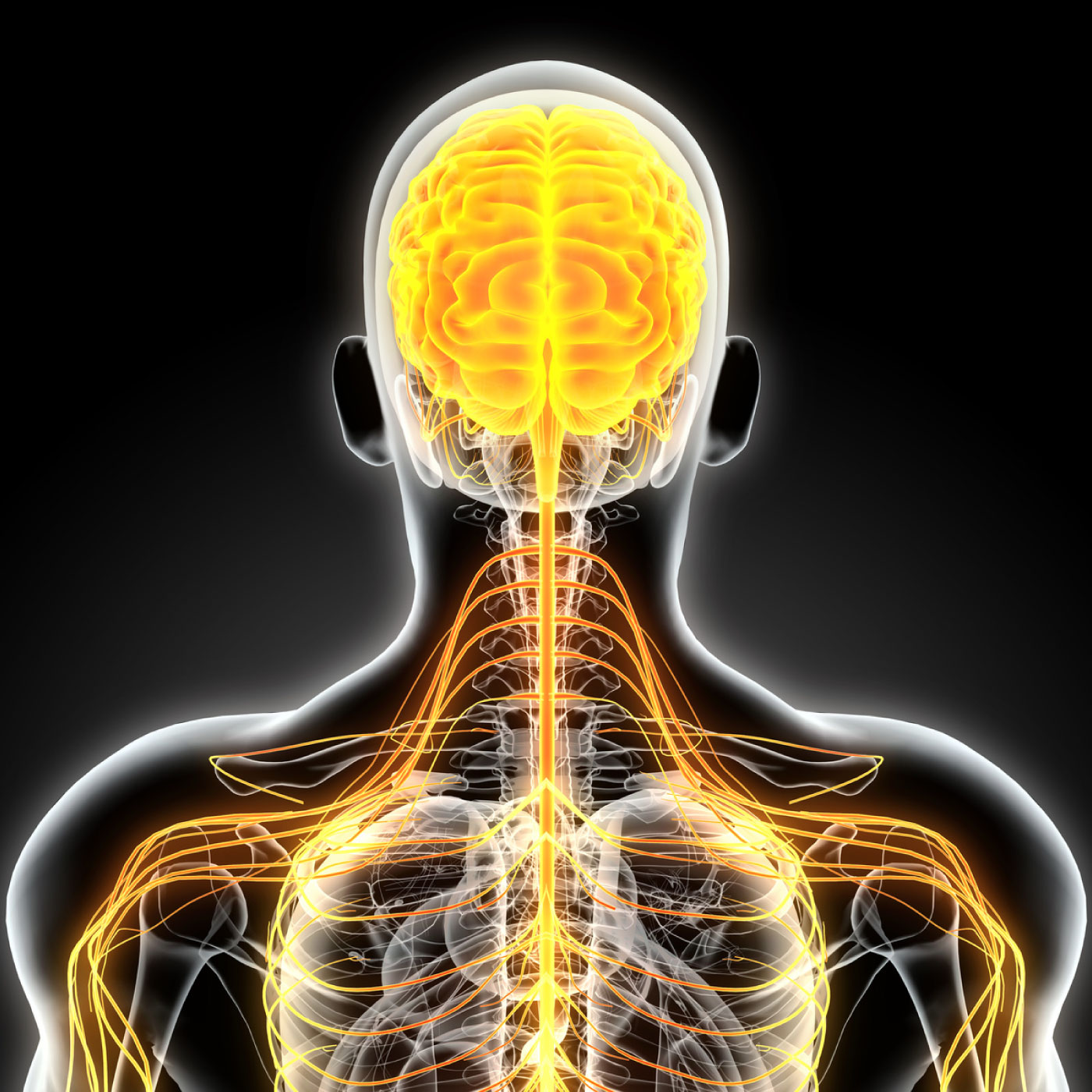 032: Understanding the Incredible Power of the Nervous System w/ Irene Lyon: Part 1